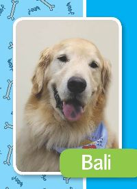 Bali-M | Paws for Pax