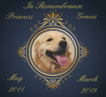 RIP Gracie | Paws for Pax