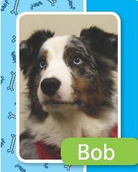 bob-medium | Paws for Pax