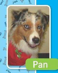 pan-medium | Paws for Pax
