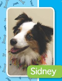 Sidney | Paws for Pax